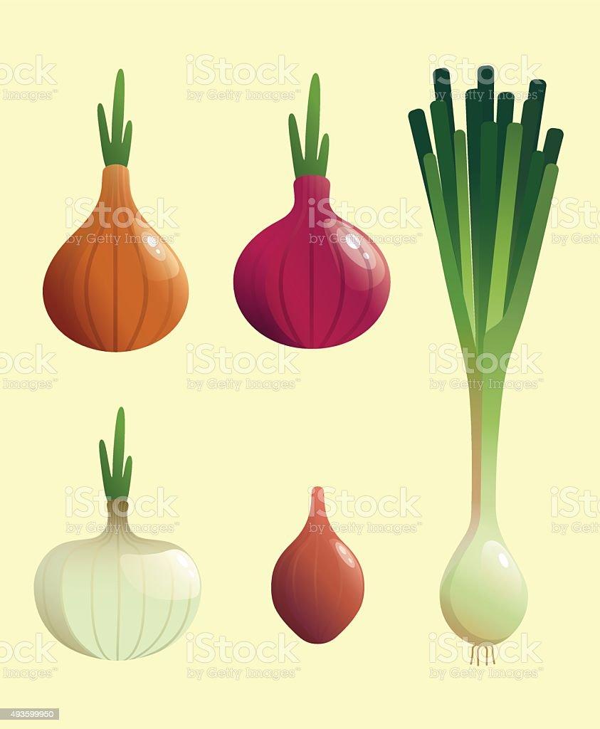 Onion Vector illustrations vector art illustration