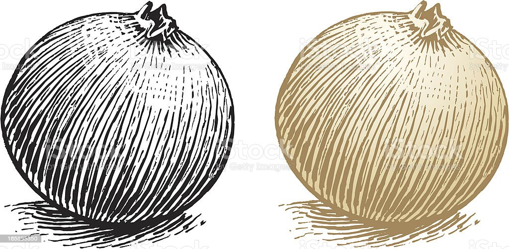 Onion - Vegetable Food royalty-free stock vector art