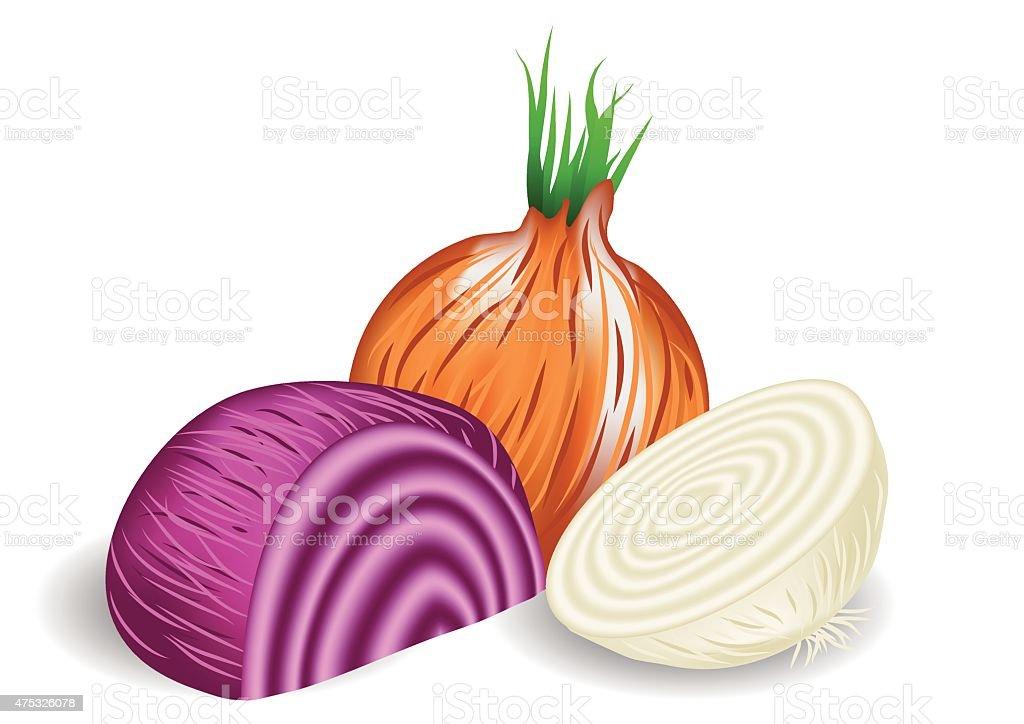 onions vector art illustration