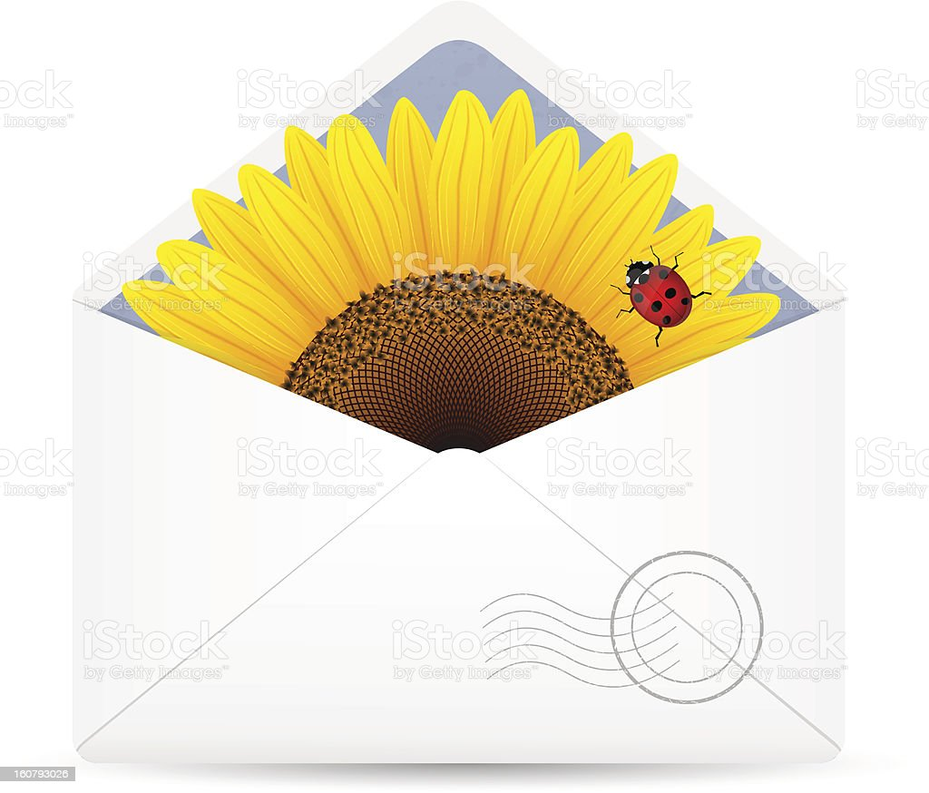 Open envelop with sunflower and ladybird. royalty-free stock vector art