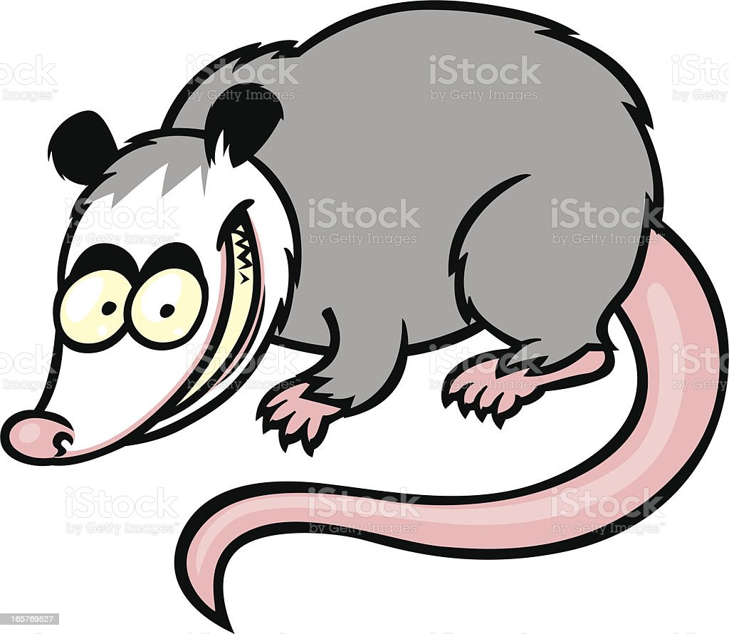 opossum royalty-free stock vector art