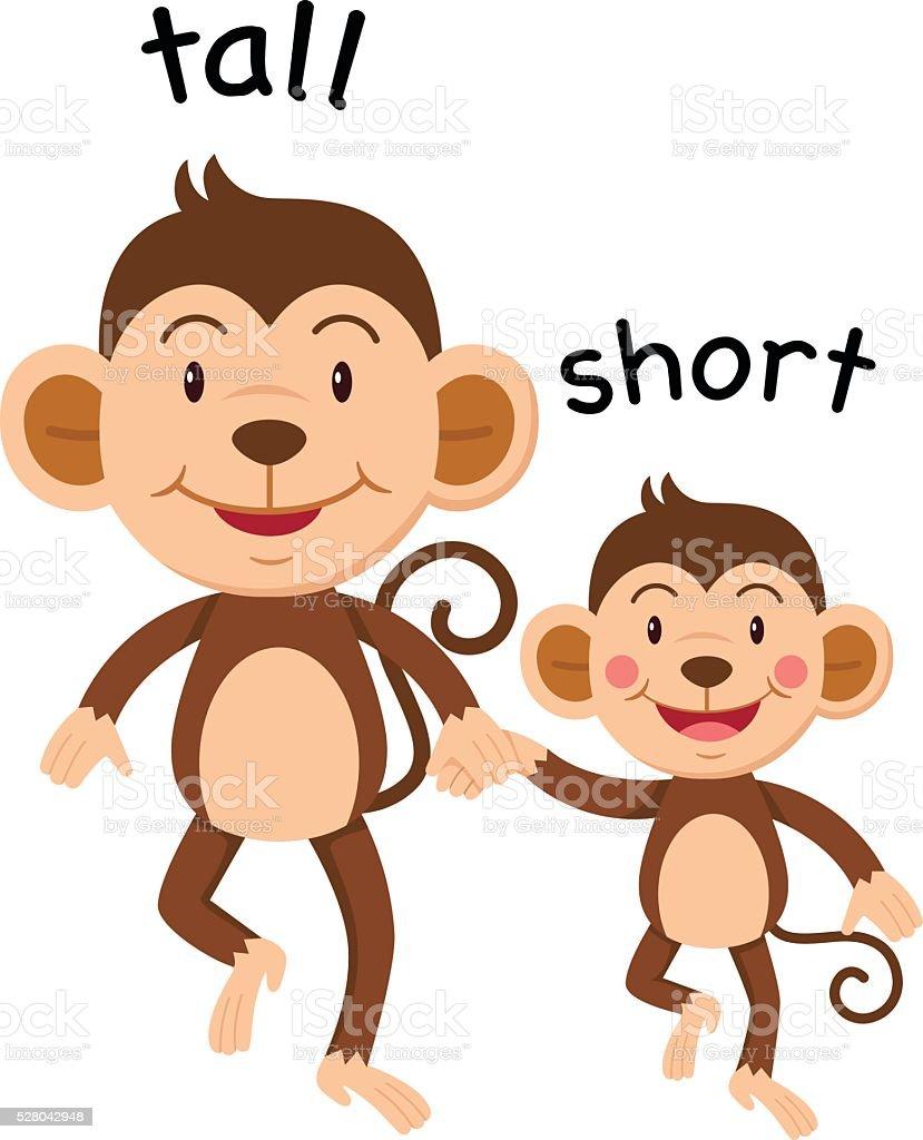 Opposite words tall and short vector vector art illustration