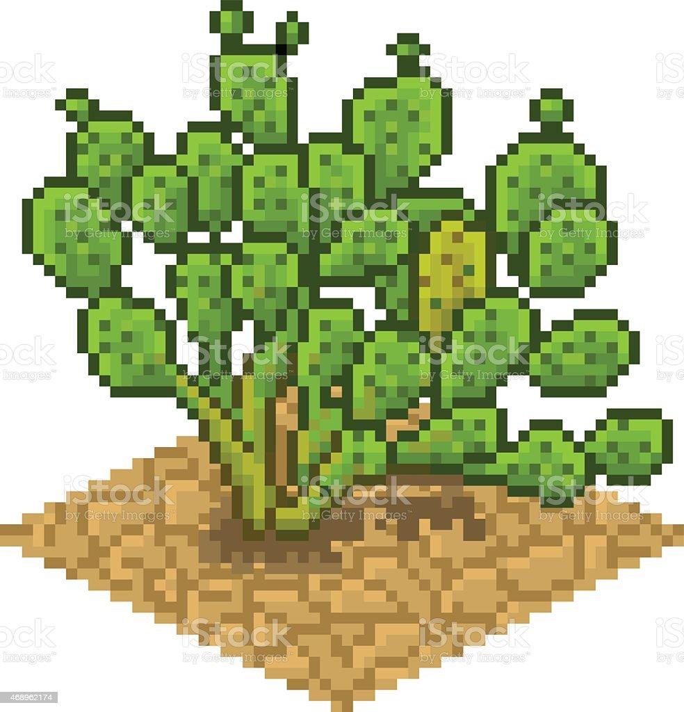 Opuntia ficus vector illustartion vector art illustration