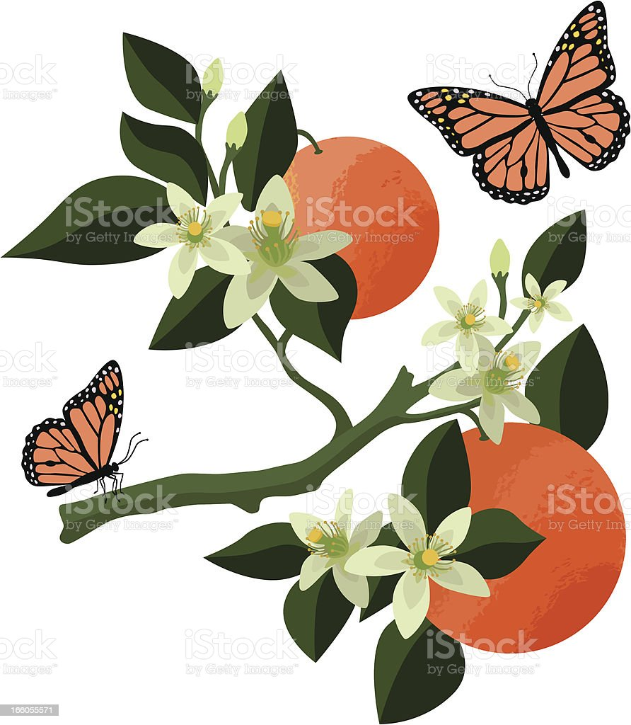 orange blossoms and monarch butterflies vector art illustration