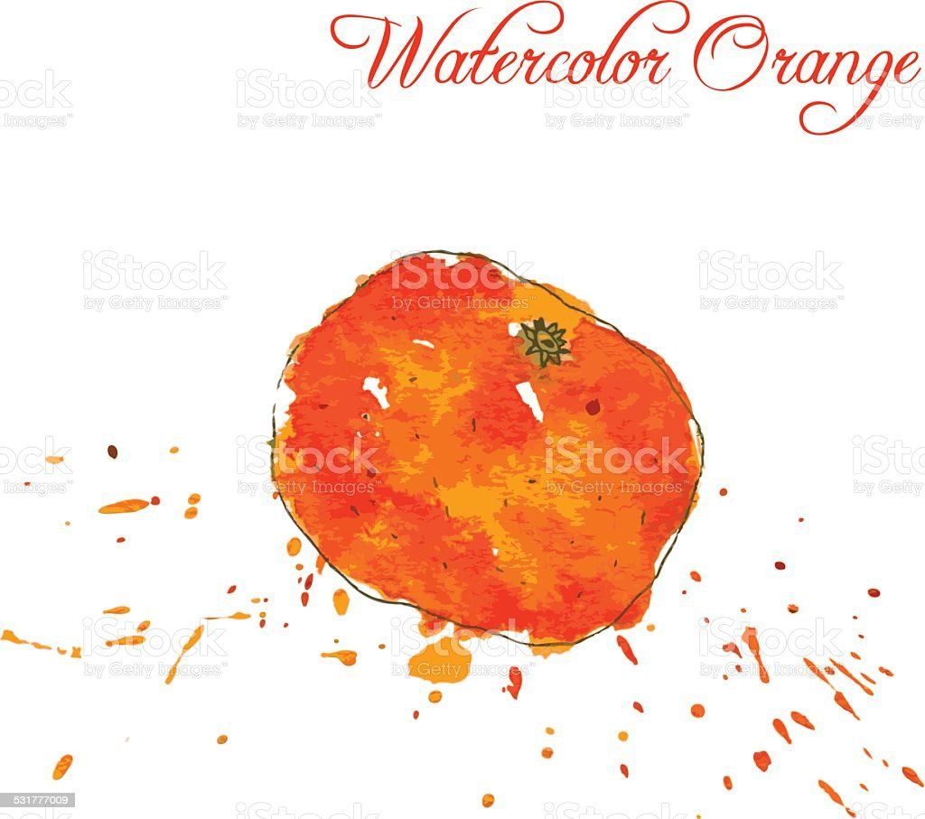 orange drawing by watercolor vector art illustration
