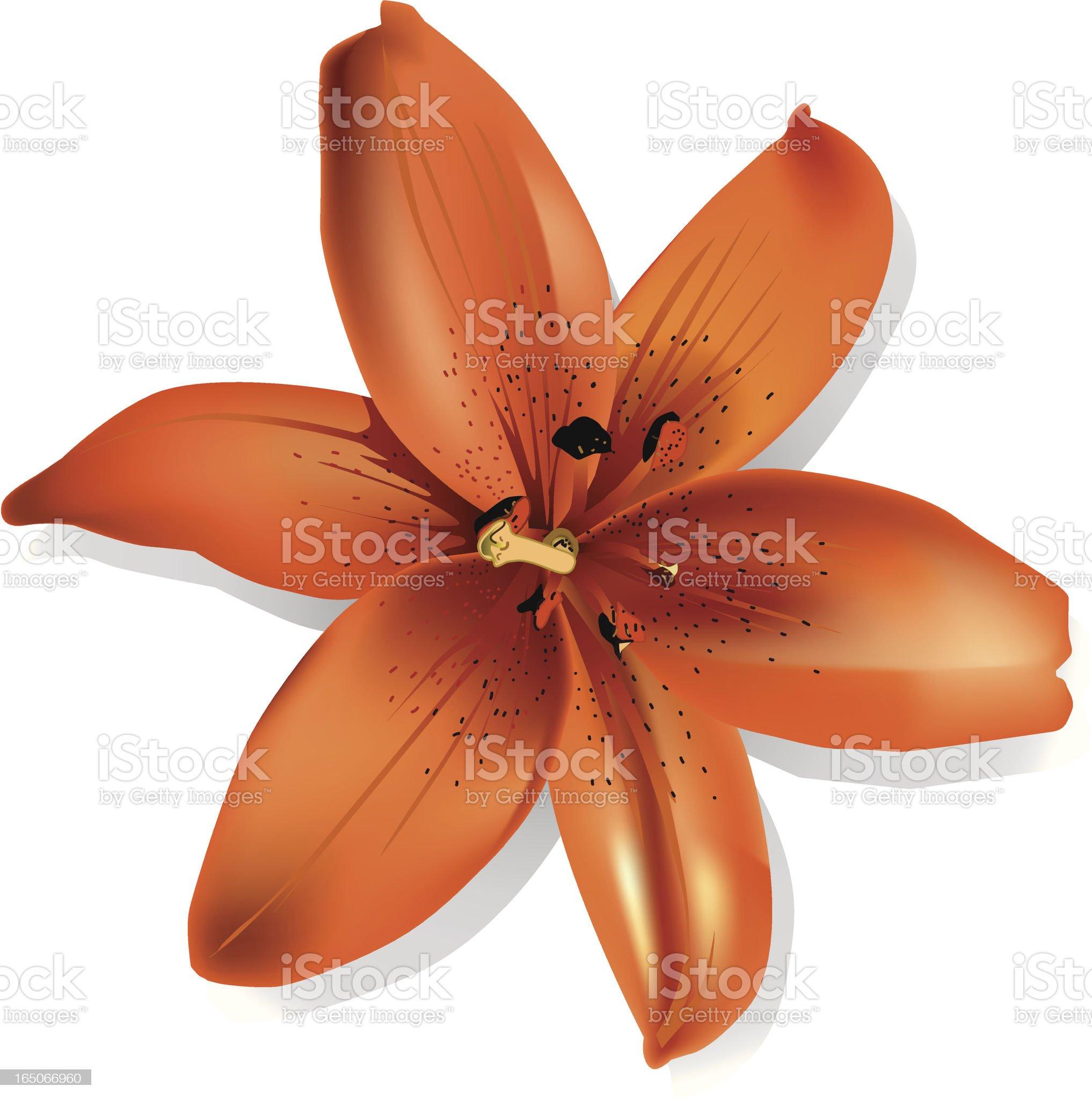Orange flower royalty-free stock vector art