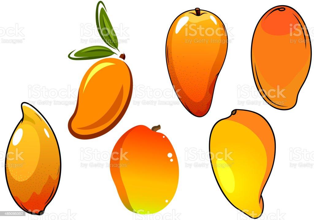 Orange fresh tropical mango fruits vector art illustration