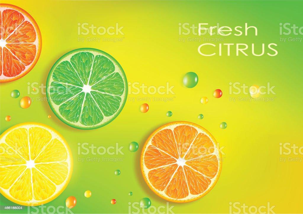 orange, lemon, lime and grapefruit vector art illustration