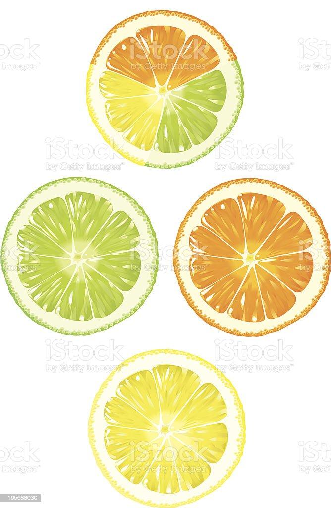 Orange, Lime and Lemon royalty-free stock vector art