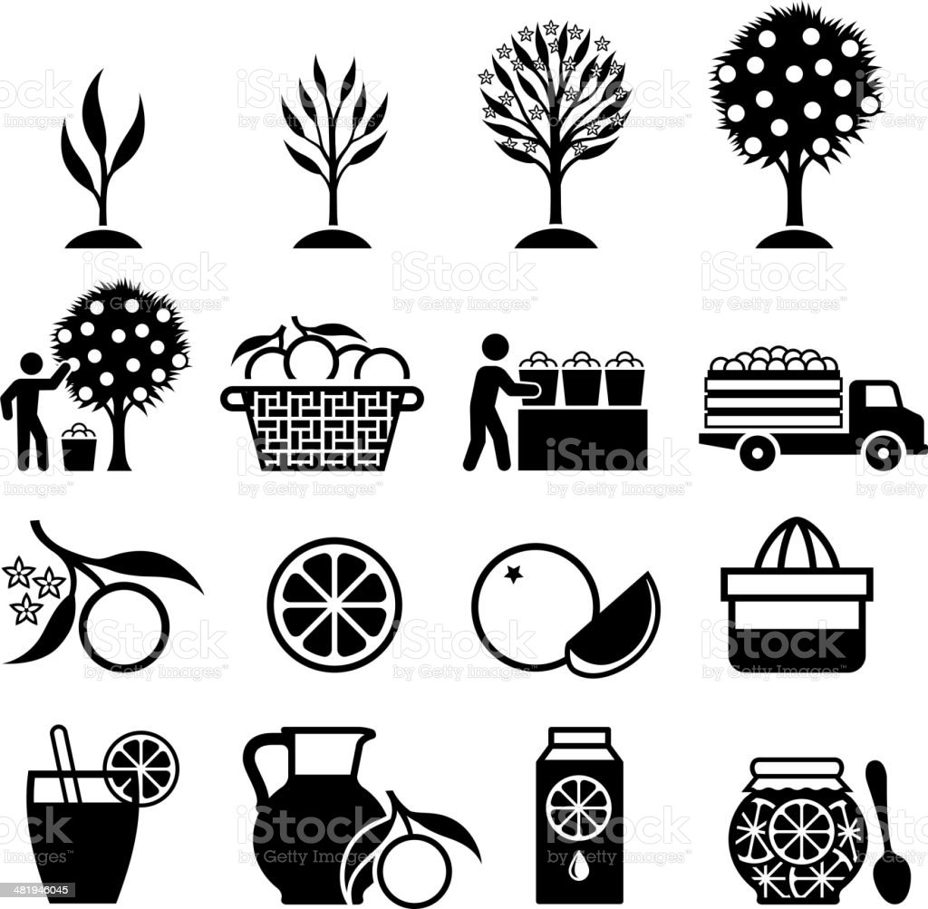 Orange Tree Growing and organic farming black & white icons vector art illustration