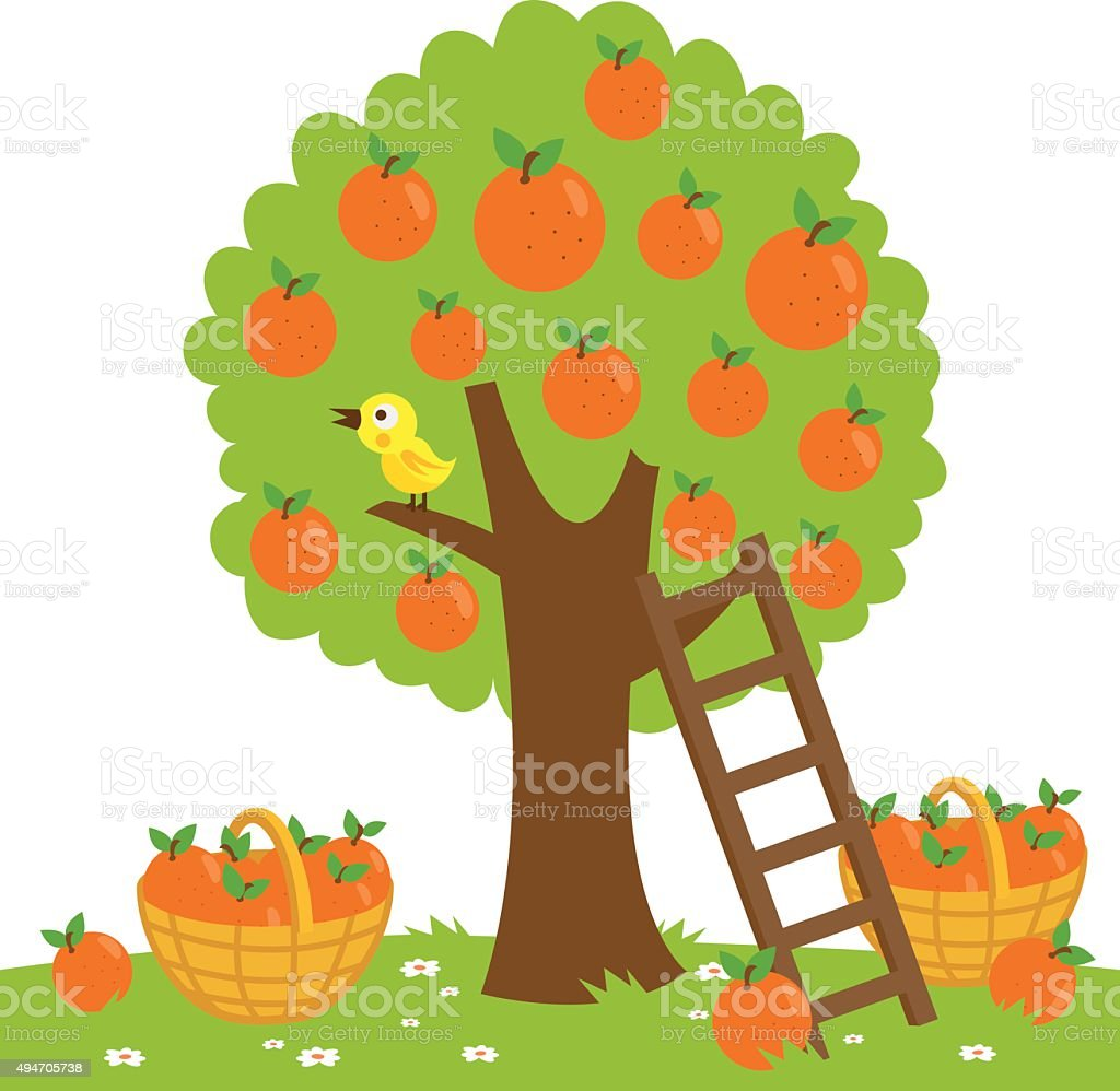 Orange tree harvesting vector art illustration