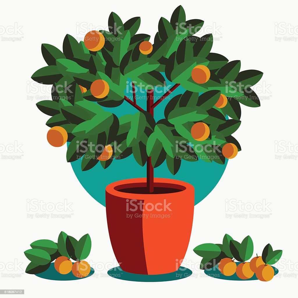 Orange tree in a flowerpot on white background vector art illustration