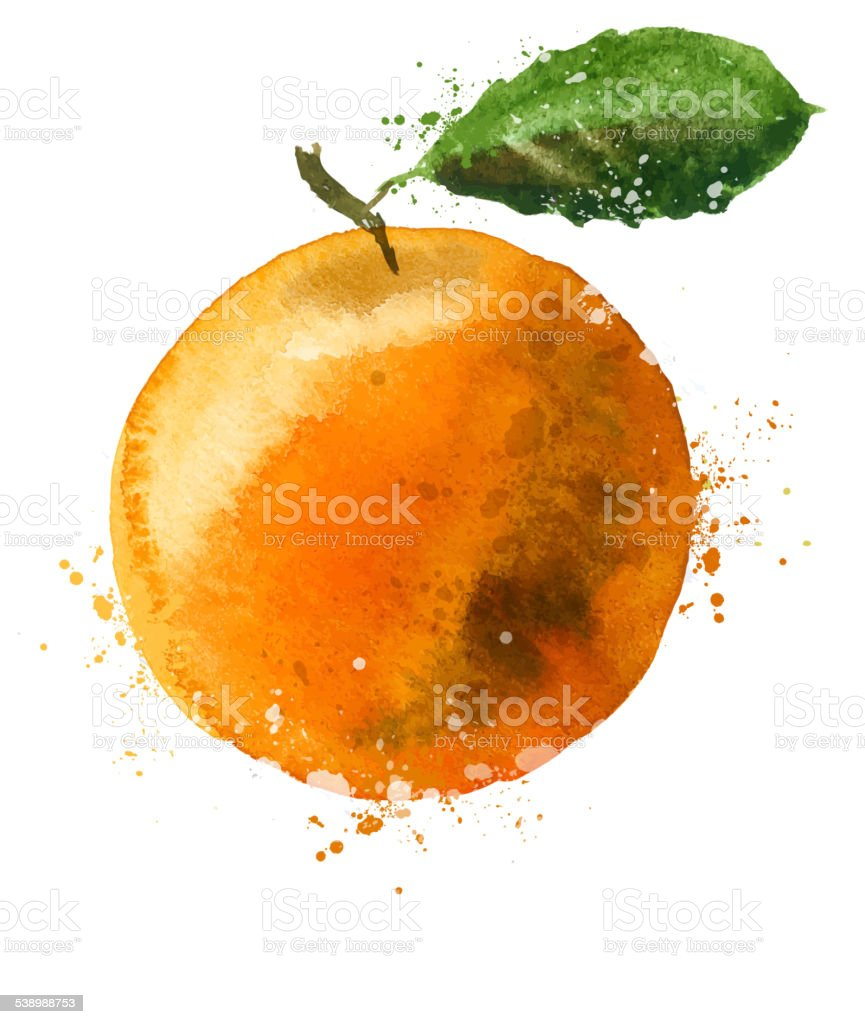 Orange vector logo design template. fruit or food  icon vector art illustration