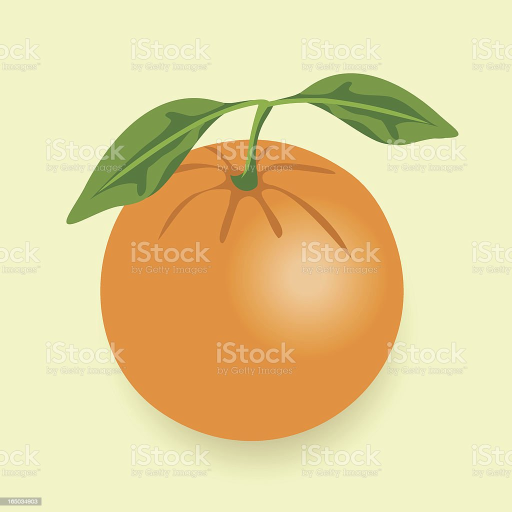 Orange - vector royalty-free stock vector art