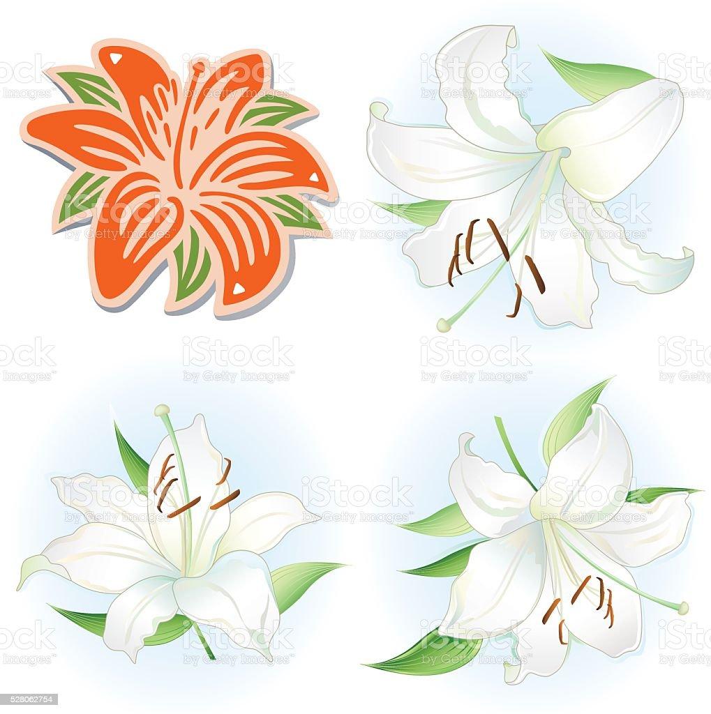 Orange & white lilies set vector art illustration