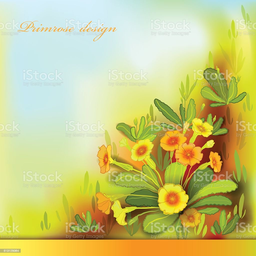 Orange yellow primroses vector art illustration