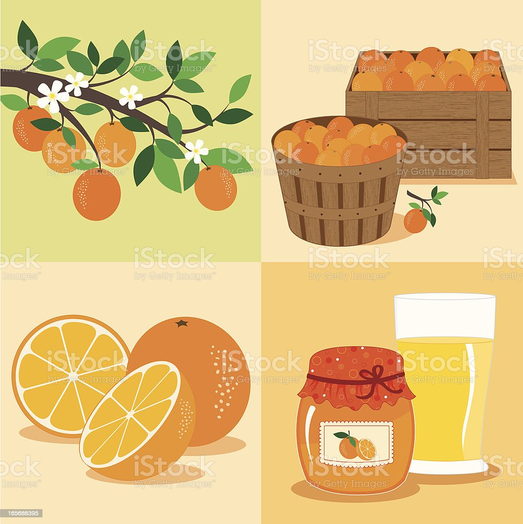 Oranges from Tree to Table vector art illustration