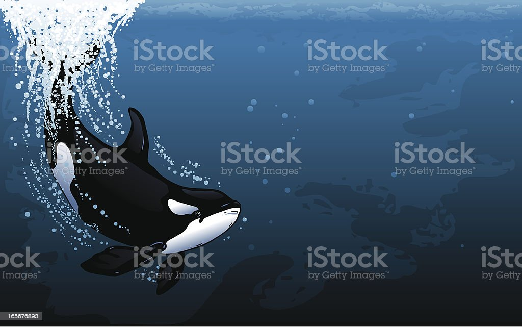 Orca Dive Widescreen royalty-free stock vector art
