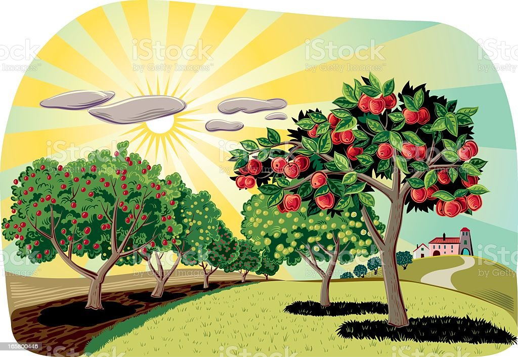 Orchard vector art illustration