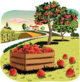 Orchard with Apple crate