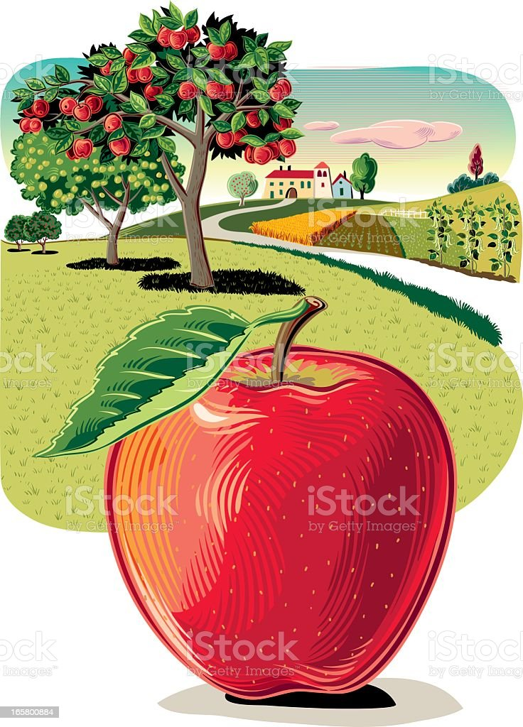Orchard with Apple vector art illustration