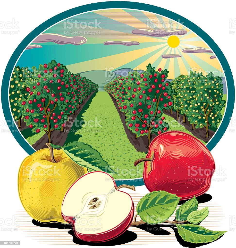 Orchard with Apples vector art illustration