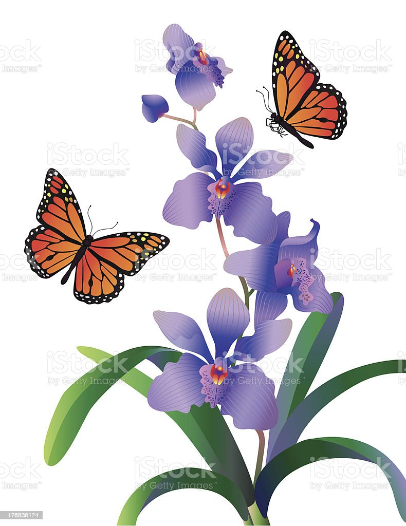 orchid and monarch butterflies vector art illustration
