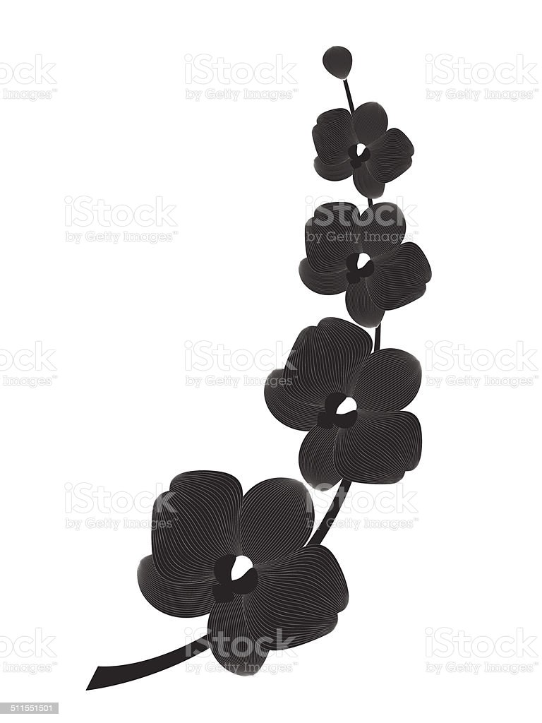 Orchid branch silhouette, vector art illustration