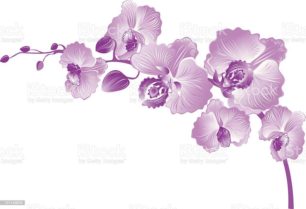 Orchid branch vector art illustration