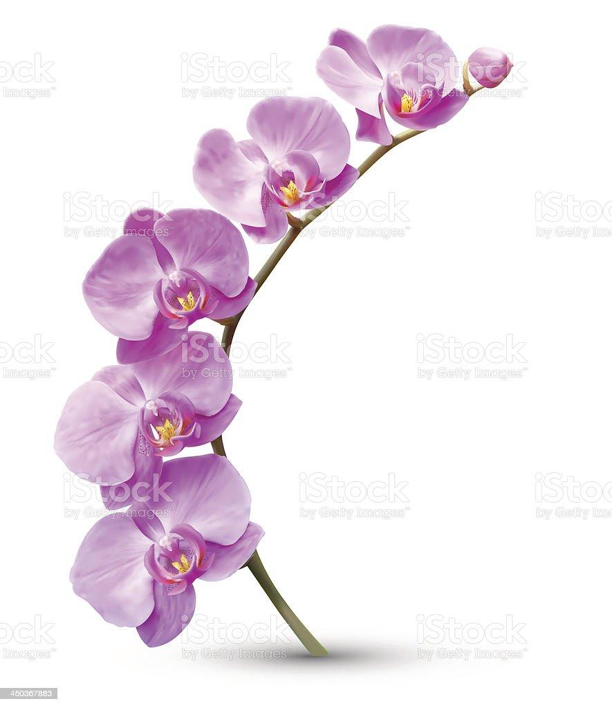 Orchid flower branch vector art illustration