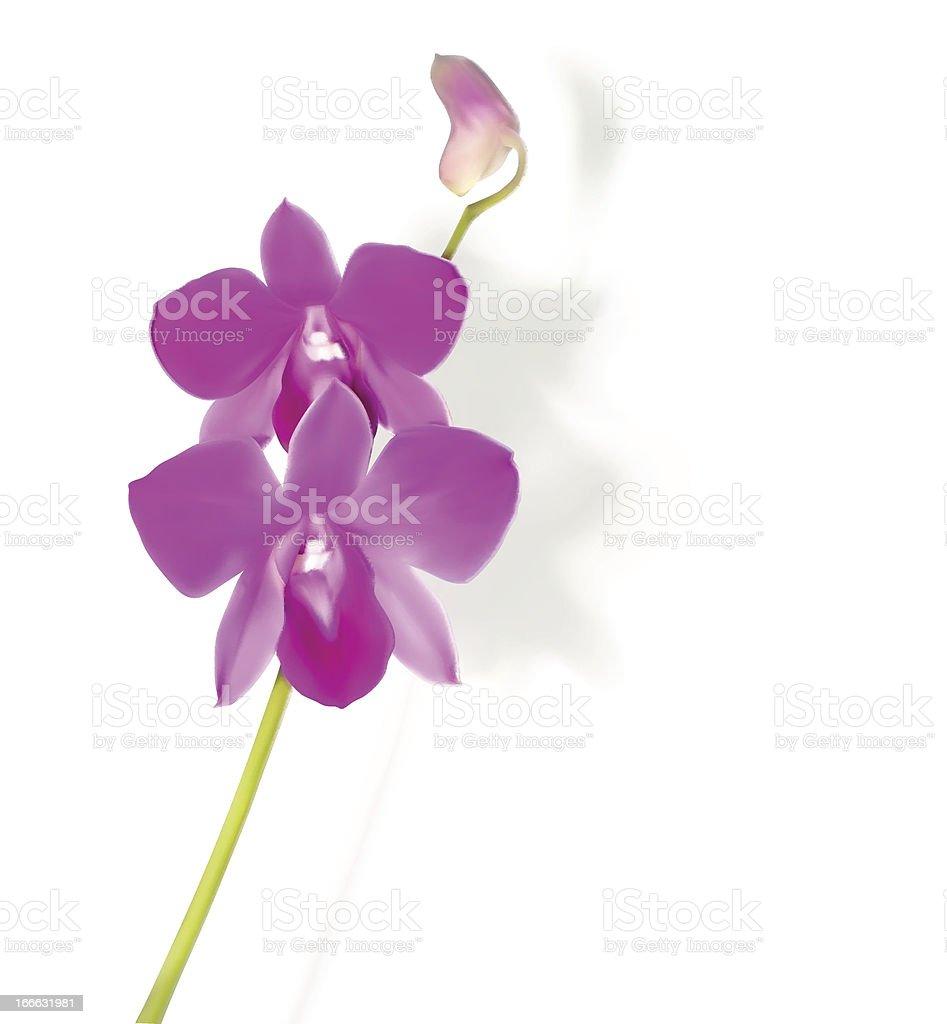 Orchid flower vector illustration royalty-free stock vector art