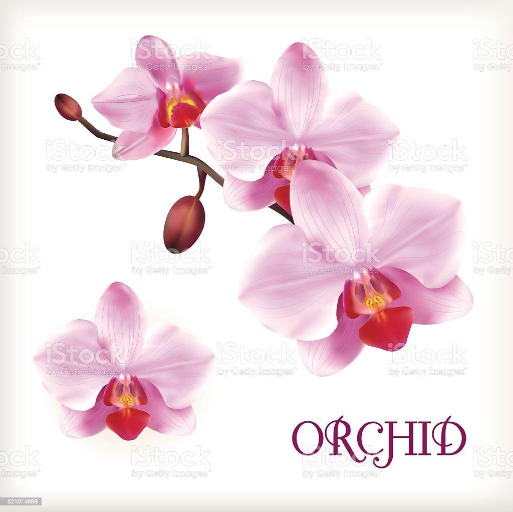 Orchid flowers set vector art illustration