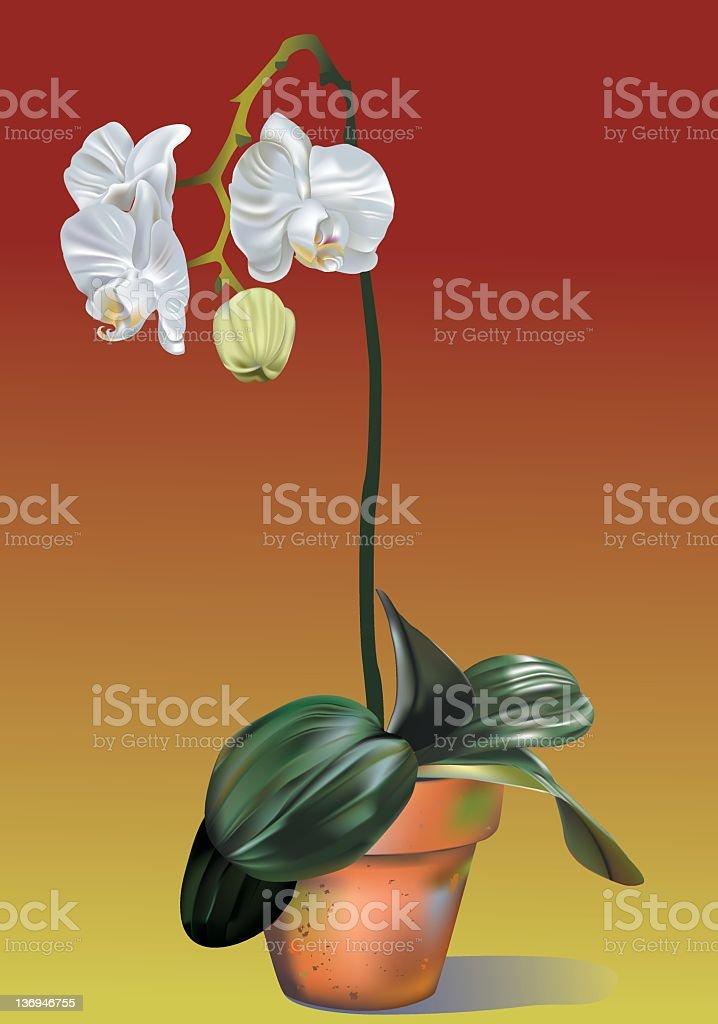Orchid - Gradient Mesh stock photo