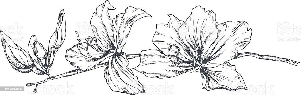 Orchid tree vector art illustration