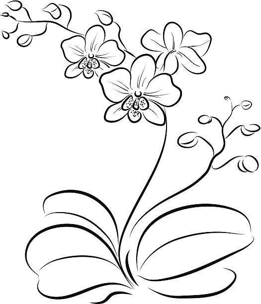 Orchid Clip Art, Vector Images & Illustrations - iStock