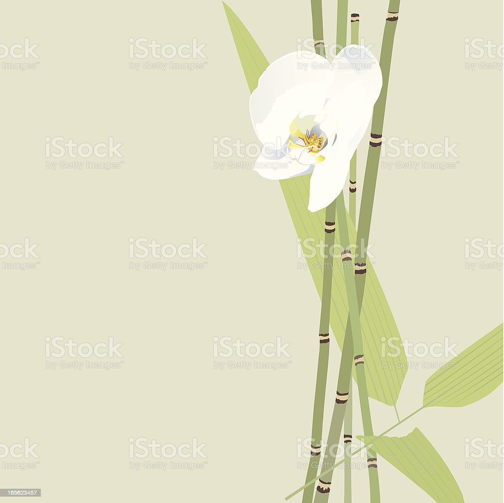 Orchid White and Bamboo vector art illustration