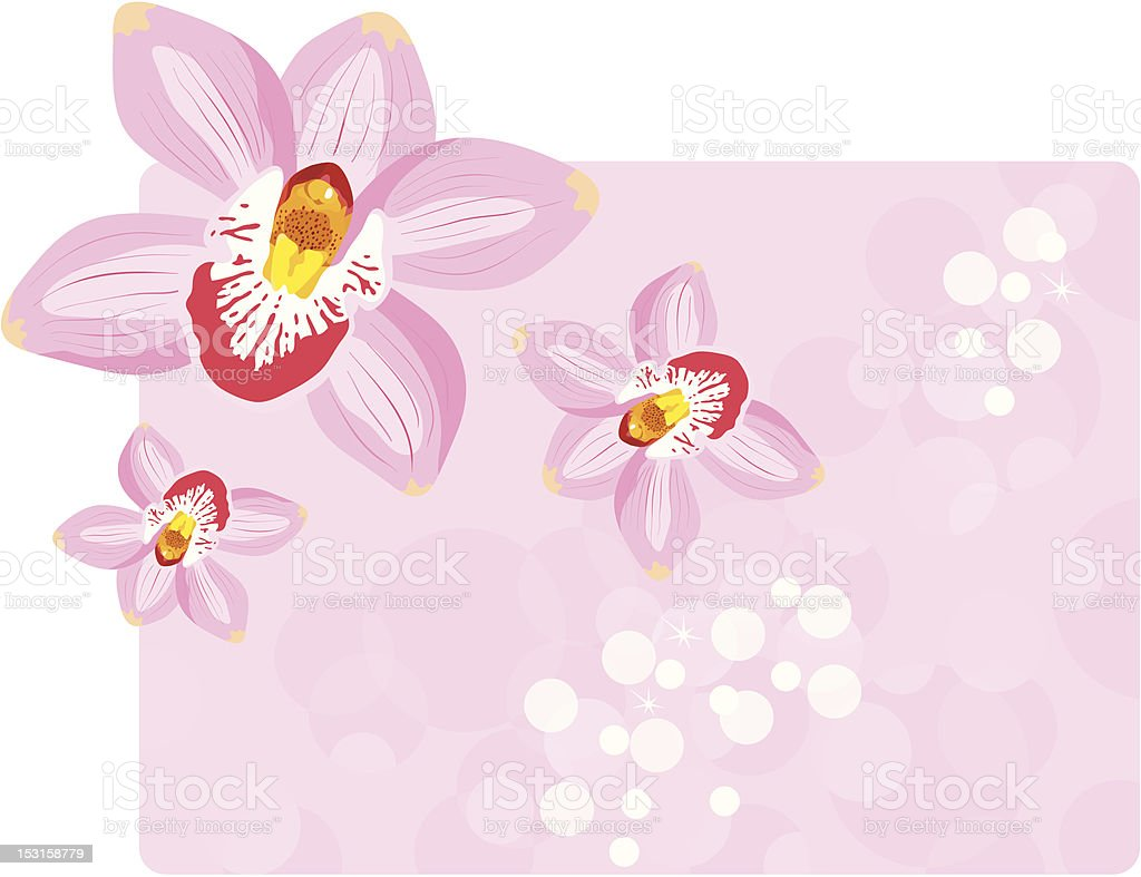 Orchids background vector art illustration