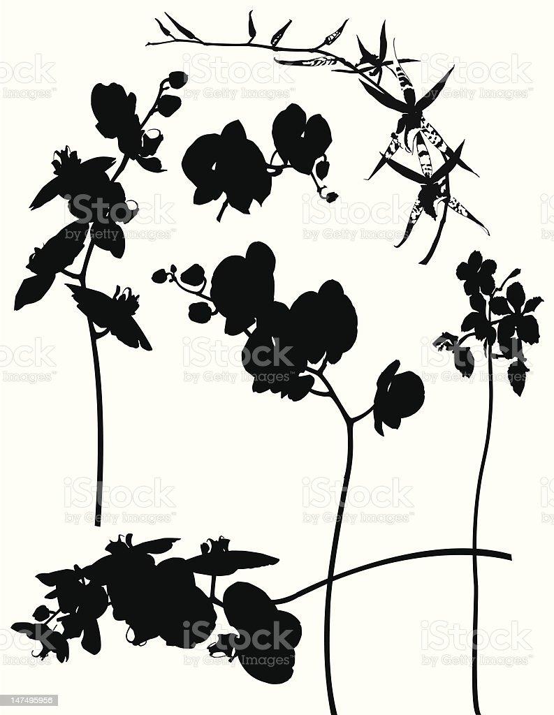 Orchids Silhouette -Design Elements vector art illustration