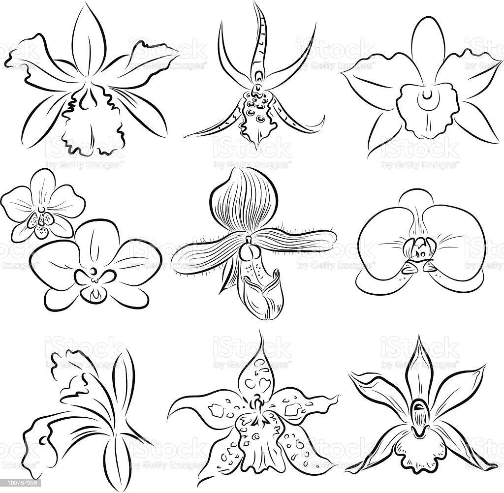 Orchids vector art illustration