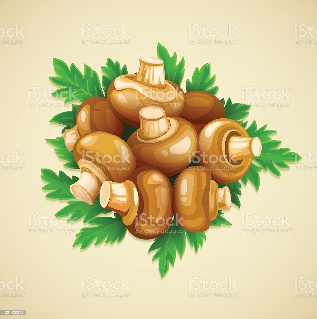 Organic food mushrooms champignons with green parsley vector art illustration