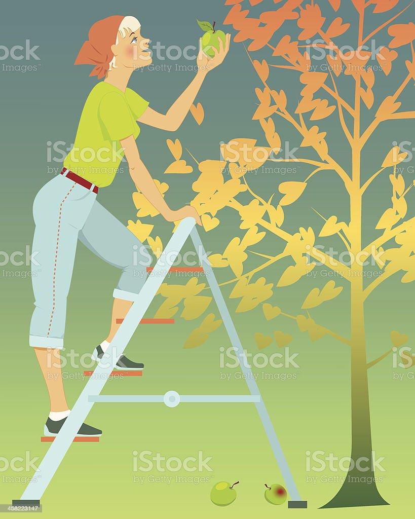 Organic garden vector art illustration