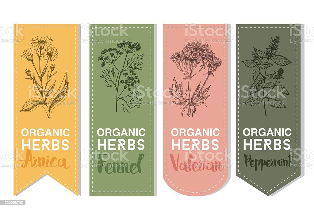 Organic herbs label of arnica fennel valerian peppermint vector art illustration