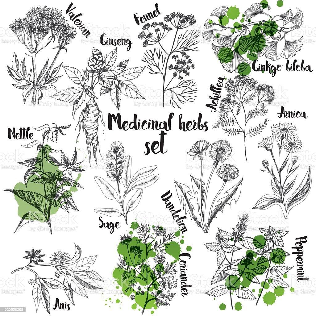 Organic herbs set of label vector art illustration