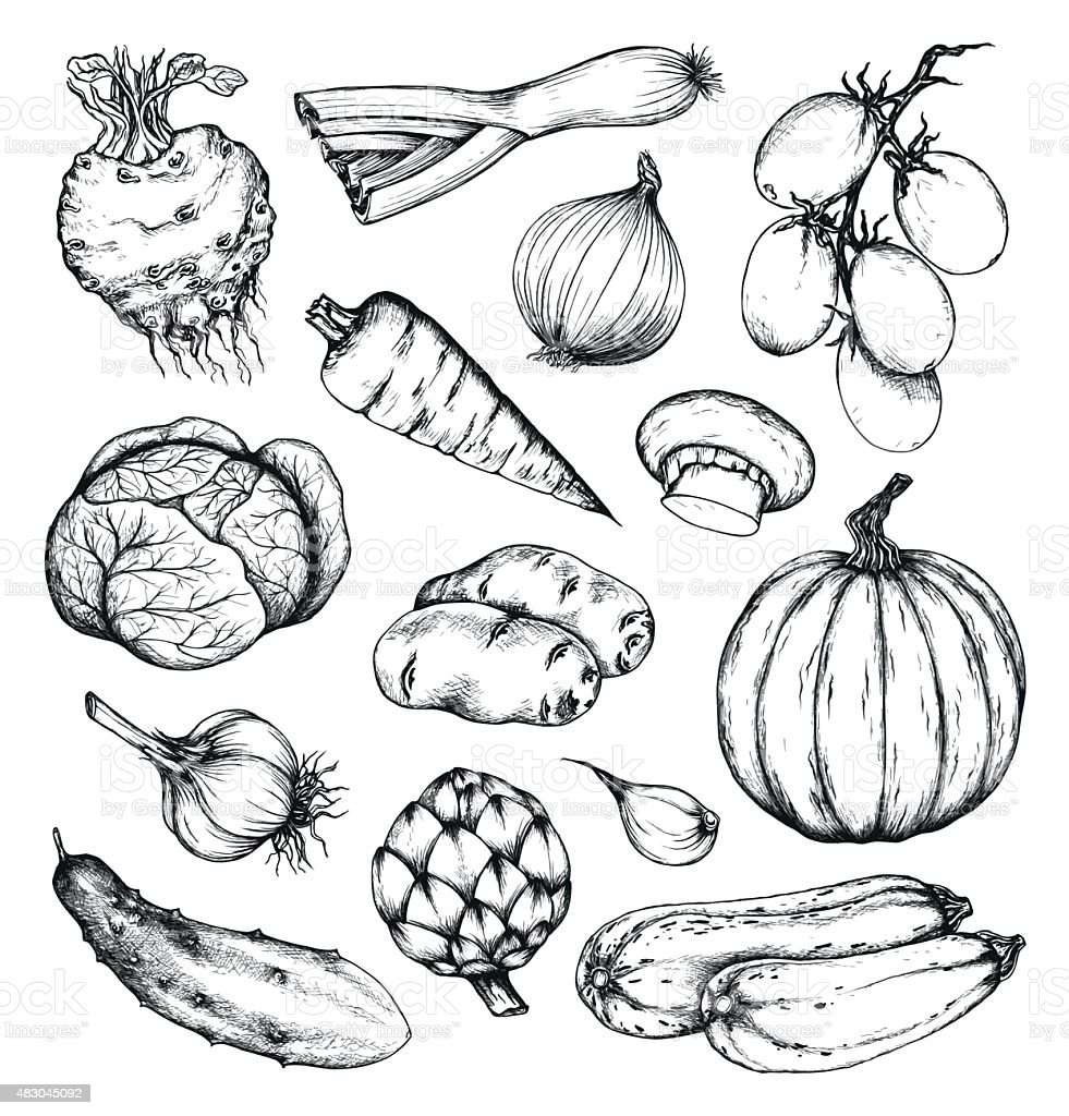 Organic natural fresh vegetables set vector art illustration