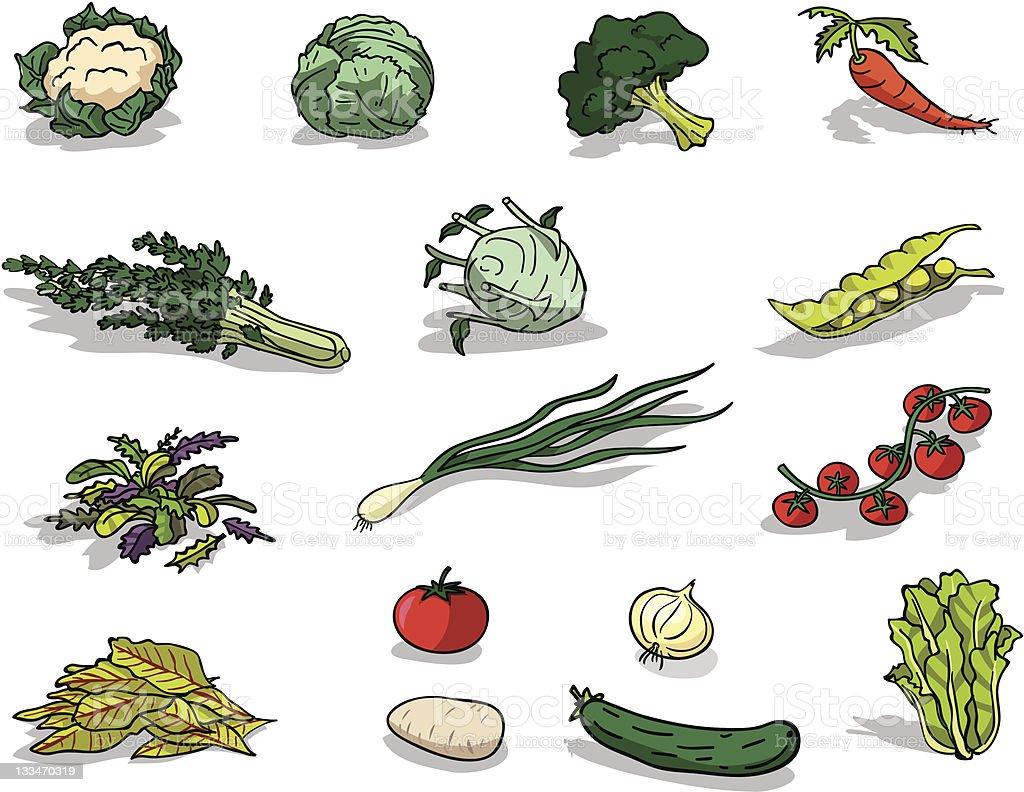 Organic vegetable vector art illustration