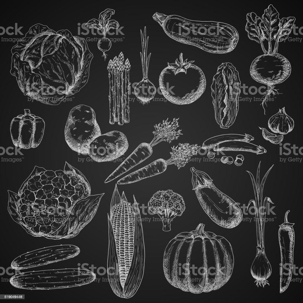 Organic vegetables chalk sketches set vector art illustration