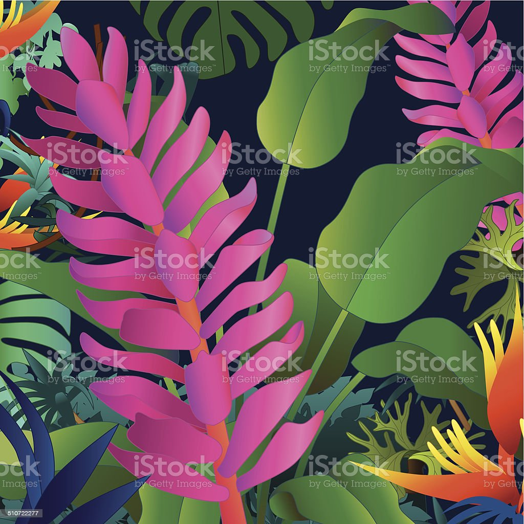 ornamental ginger and heliconia tropical flowers vector art illustration