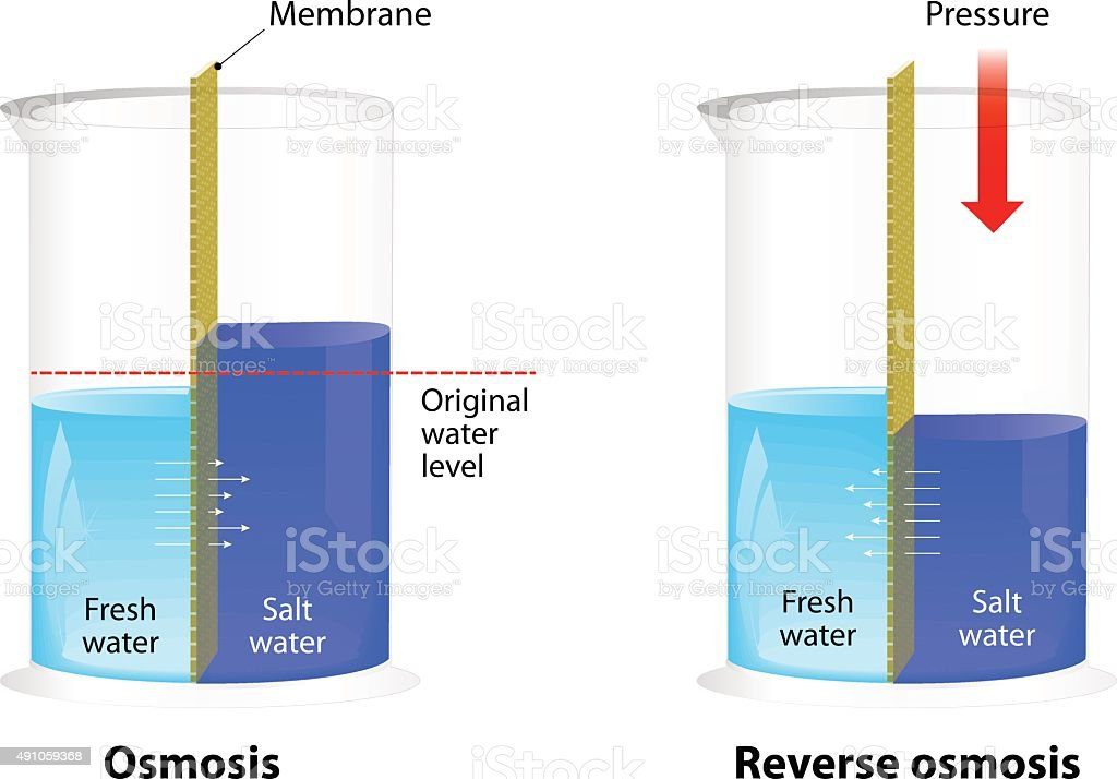 Osmosis and Reverse Osmosis vector art illustration