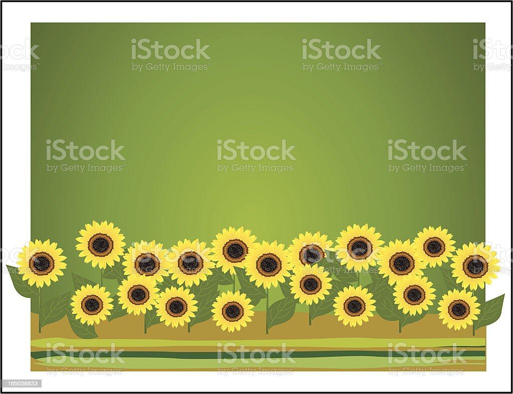 outdoor - sunflower landscape royalty-free stock vector art
