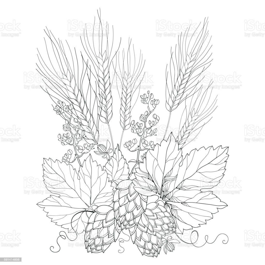 Outline barley and hops in black isolated on white. vector art illustration